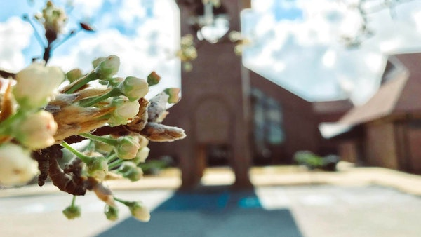 Focus on trees blooming in front of Saxe Gotha Presbyterian Church