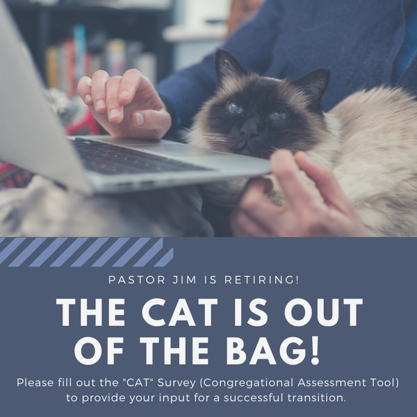 Cat Is Out Of The Bag Graphic