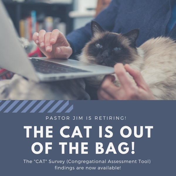 Copy Of Cat Is Out Of The Bag Graphic